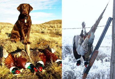 We can supply you with a Bird Dog and Guide!